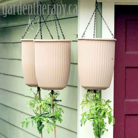 How to Plant Upside Down Tomato Planters Topsy Turvy DIY--great DIY garden website