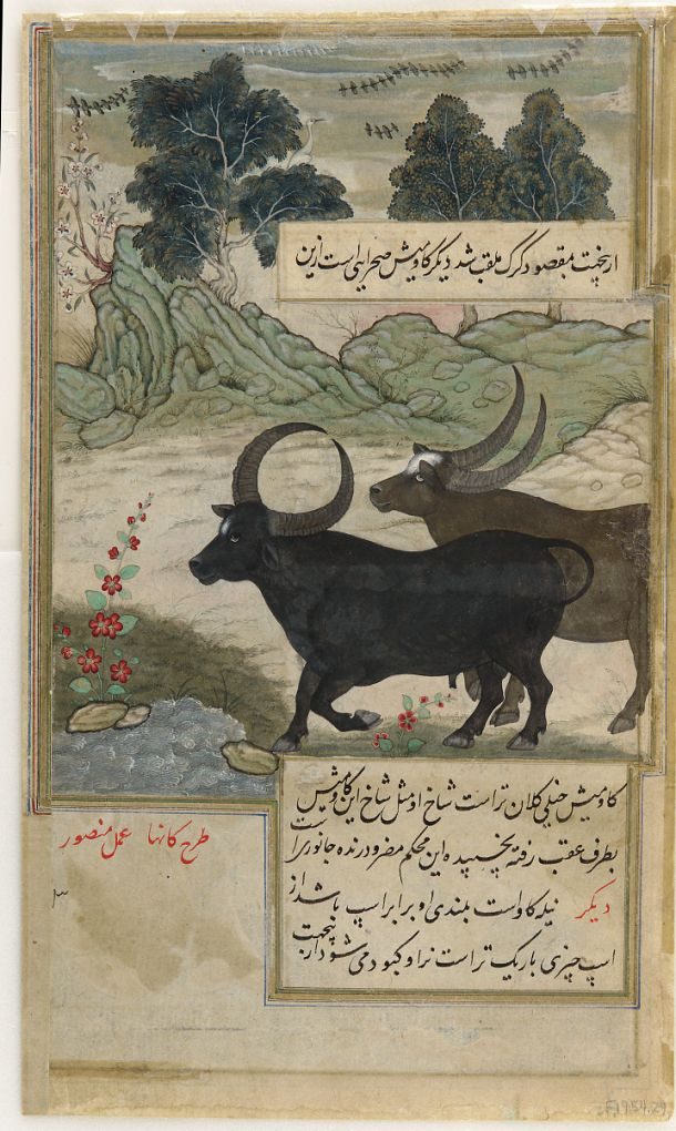 obverse: Two Wild Buffalo [obverse]; Two Blue Bulls and Two Hog Deer [reverse] from a Baburnama