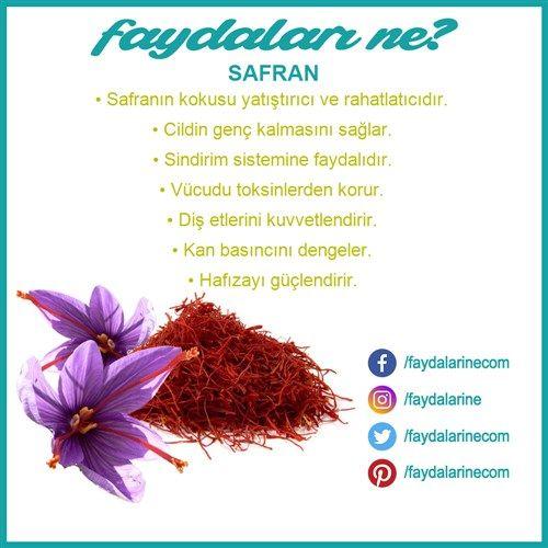 #safran #safranın faydaları #safranın faydaları nelerdir #faydaları #zararları #faydalarıne #faydalarine