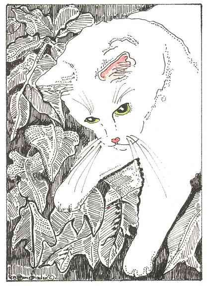 Love white cats!