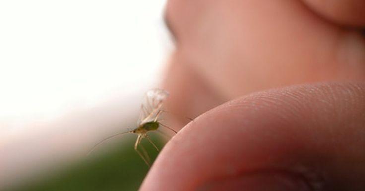 Roupas claras e escuras na proteção contra picadas de mosquito. Durante a primavera e o verão, muitas pessoas acabam passando o tempo ao ar livre lutando contra os mosquitos. A fim de evitar essas criaturas, muitas vezes somos orientados a usar roupas de cor clara em vez de escura.