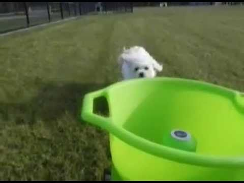 17 Best Images About Videos Of Godoggo Fetch Machine
