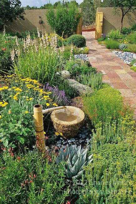 A water saving xeriscape including salvia, daylily, broom, Hesperaloe, penstemon and sedum.