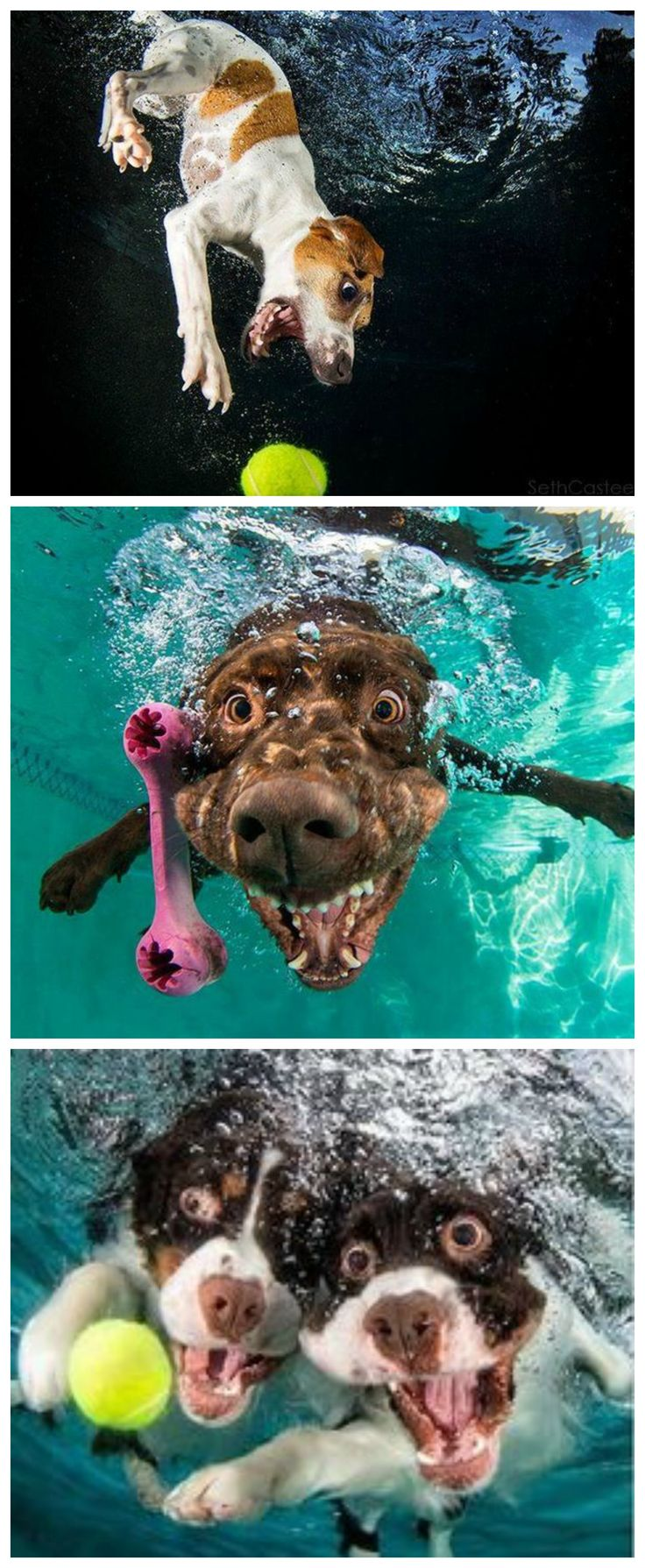Check out these 12 hilarious pictures of dogs underwater. Dogs...you gotta love 'em <3 :))