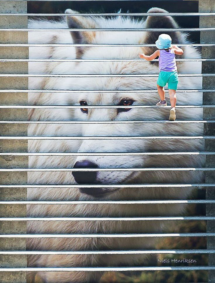 Scalinata The Wolf And The Girl – Ottawa (Canada)