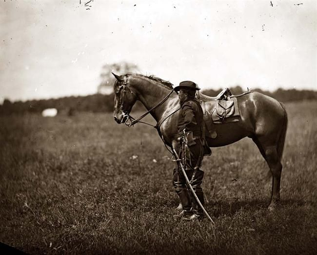 122 Best This Is Us Images On Pinterest: 122 Best Images About US Civil War Horses And Their