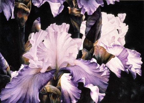 "Titled ""Flirtation - Irises""  by Arleta Pech"