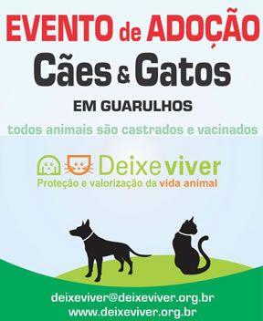 Internacional Shopping Guarulhos realiza feira de adoção de cães e gatos