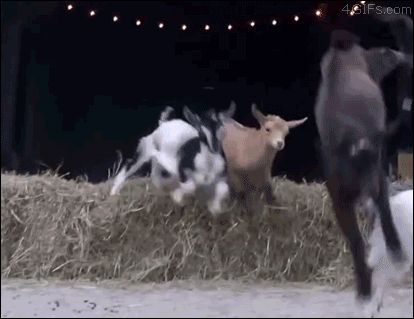 Gotta love a good goat gif (among others)!