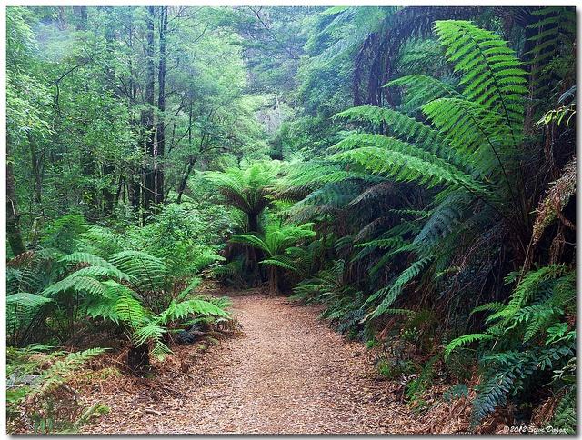 Montezuma Falls, Tasmania. A lovely 10km 3hr walk near Roseberry, Tasmania. Australia