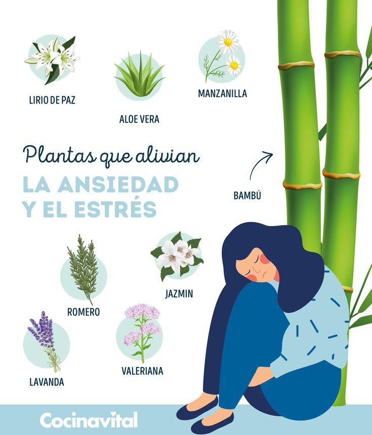 ¡Dale la bienvenida a estas plantas y, dile adiós al estrés y la ansiedad! Con solo tenerlas en casa o hacer un té de alguna de ellas, serán de gran ayuda. Cactus, Plant Care, Romance, Blog, Flowers, Plants, Gardening, Sweet, Gardens
