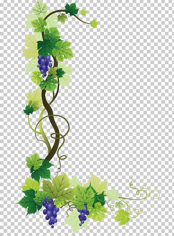 Common Grape Vine Wine Grape Leaves Png Clipart Border Branch Encapsulated Postscript Film Frame Flora Free Png Download Grape Vines Grape Tree Grapes