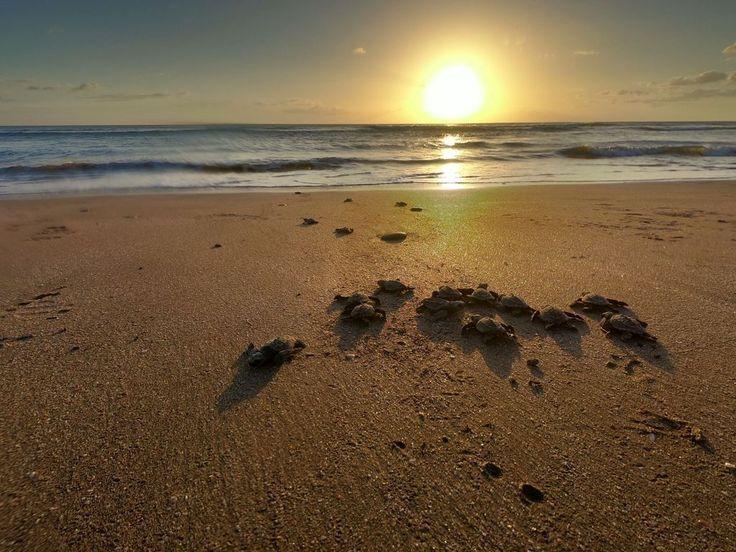 #turtle babies close to #Popoyo #travel
