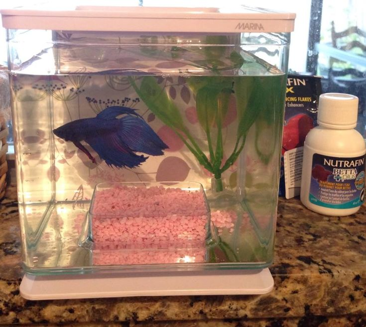 30 best images about pet ideas on pinterest for dogs for Betta fish tank kit