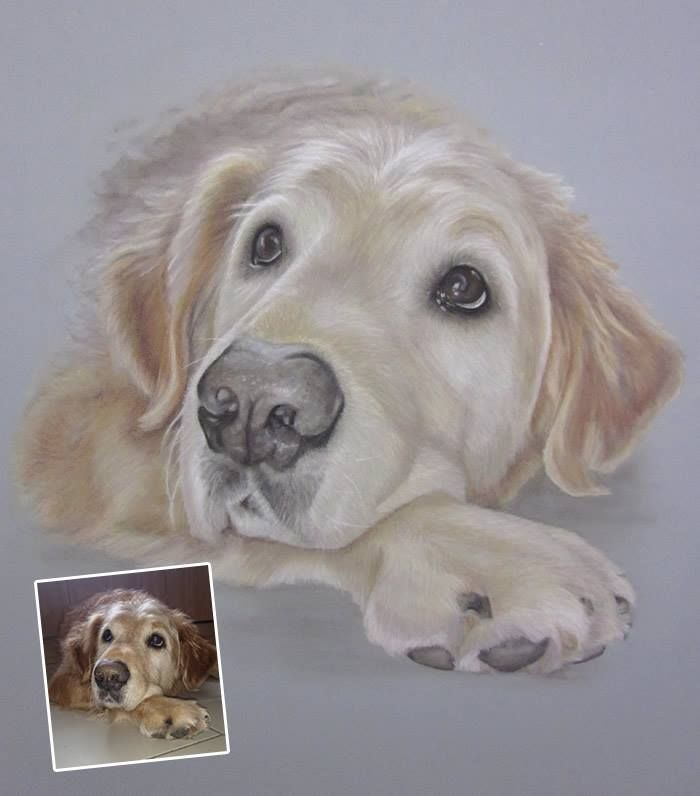 Golden retriever by pet portrait artist commissions welcome golden - Dessin golden retriever ...