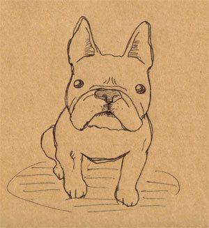French bulldog, illustration