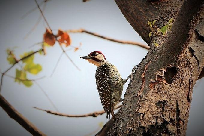 """Photo """"Woodpecker,Zimbabwe"""" by maryannwest"""