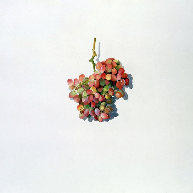 Helena Leigh-Hunt Grapes