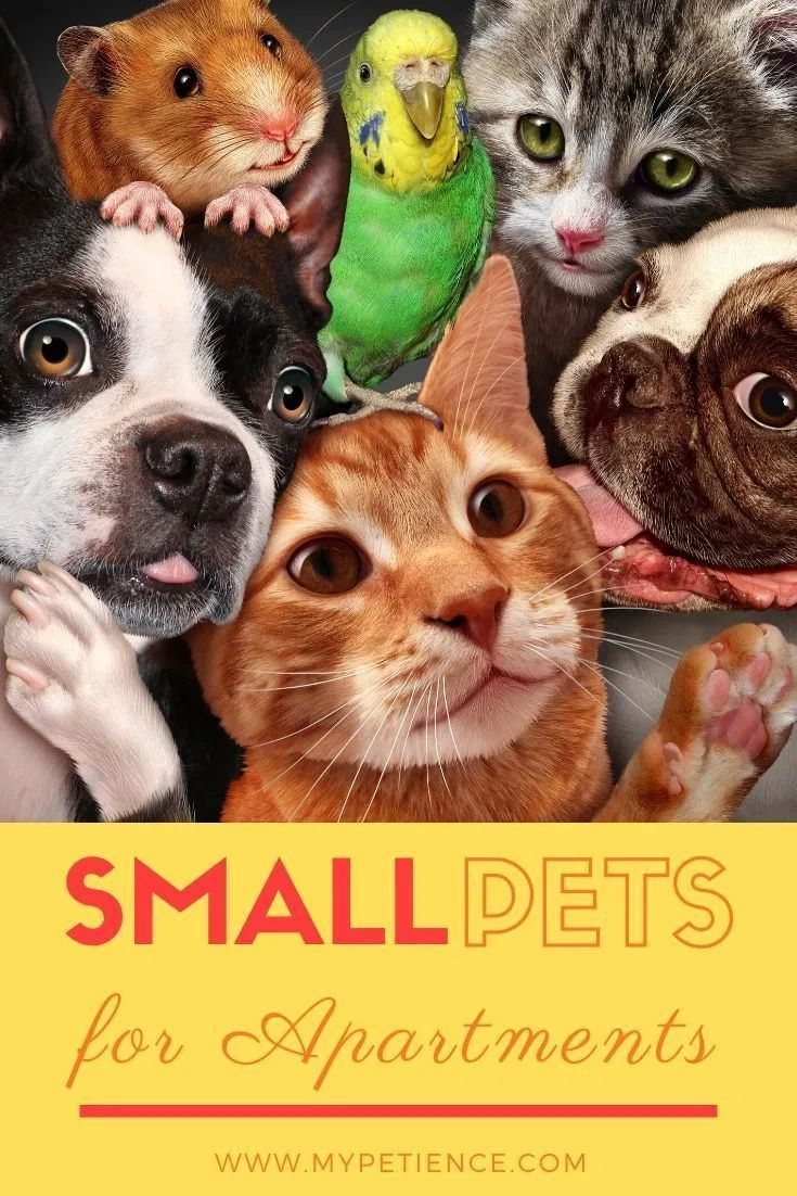 Discover The Best Small Pets For Apartments In 2020 Best Small Pets Small Pet Carrier Small Pets For Kids