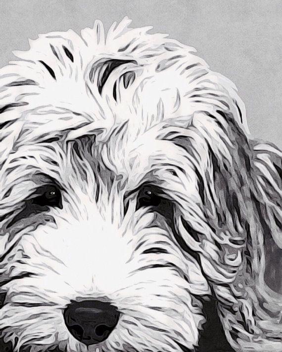 Labradoodle de blanco y negro fina reproducción de arte Giclee de mi original acrílico arte impreso blanco brillante ácido libre arte, 230