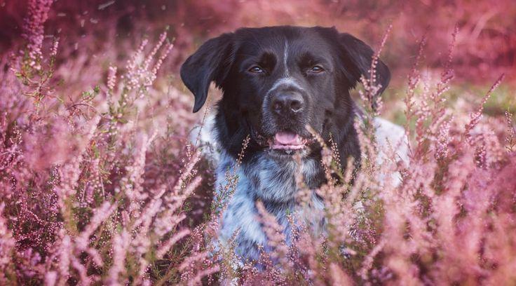 Ein Leben mit dem Hund - reduziert auf das (Un-)Wesentliche.