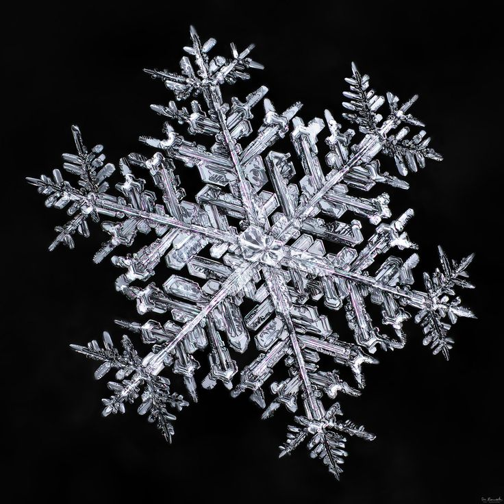 u201cStellar Dendriteu201d snowflakes are the ones we