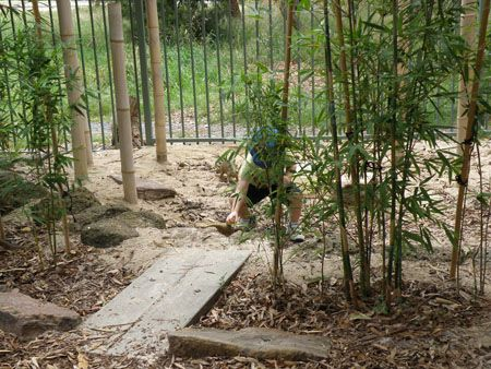 "Plant bamboo around the sandpit to create a ""Jungle sandpit"""