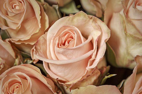 #AlexanderCherevanFineArtPhotography #ArtForHome #FineArtPrints #roses Bouquet Of Roses