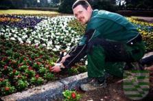 Im Werdauer Stadtgebiet, den Ortsteilen und auf dem Waldfriedhof werden in diesen Tagen durch die Fa. Garten- und Landschaftsbau Gutsche die Blumen für die Frühlingssaison 2015 gepflanzt. Die Kosten für die 7.500 Blumen liegen, wie im Vorjahr, bei rund 4.000 Euro. In diesem Jahr kamen vor allem verschieden Stiefmütterchen und Bellis zum Einsatz.