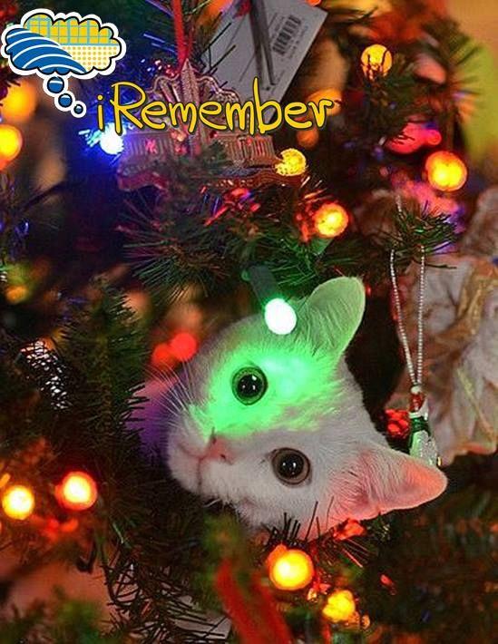 iRemember... #Christmas Countdown! 16 ημέρες απομένουν μέχρι τα Χριστούγεννα και κάποιοι... ανυπομονούν! Ετοιμάσου να τα γιορτάσεις, μαζί με την παρέα του www.iremember.gr. Φτιάξε το προφίλ σου τώρα και στόλισέ το με φωτογραφίες που ταιριάζουν στη γιορτινή ατμόσφαιρα. A, και μην ξεχάσεις να πεις στον Άι Βασίλη τι δώρο θέλεις να σου φέρει για το νέο έτος!   #iRemember... spread the #Spirit!