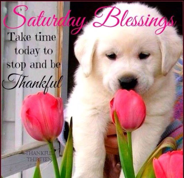 Saturday Blessings Be Thankful good morning saturday saturday quotes good…