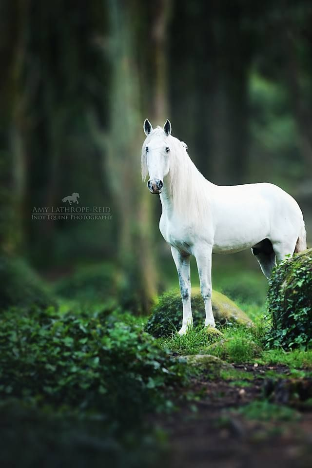 Best 25 Equine Photography Ideas On Pinterest Horse