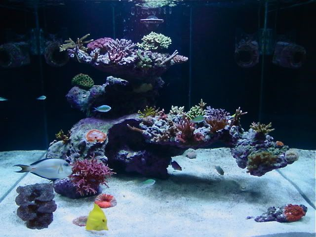 What makes a GREAT aquascape