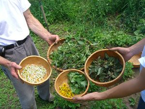 Tips on how to harvest medicinal plants and prepare herbal remedies