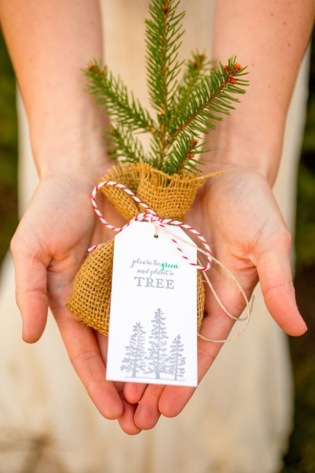 Gift your wedding guests a baby tree.