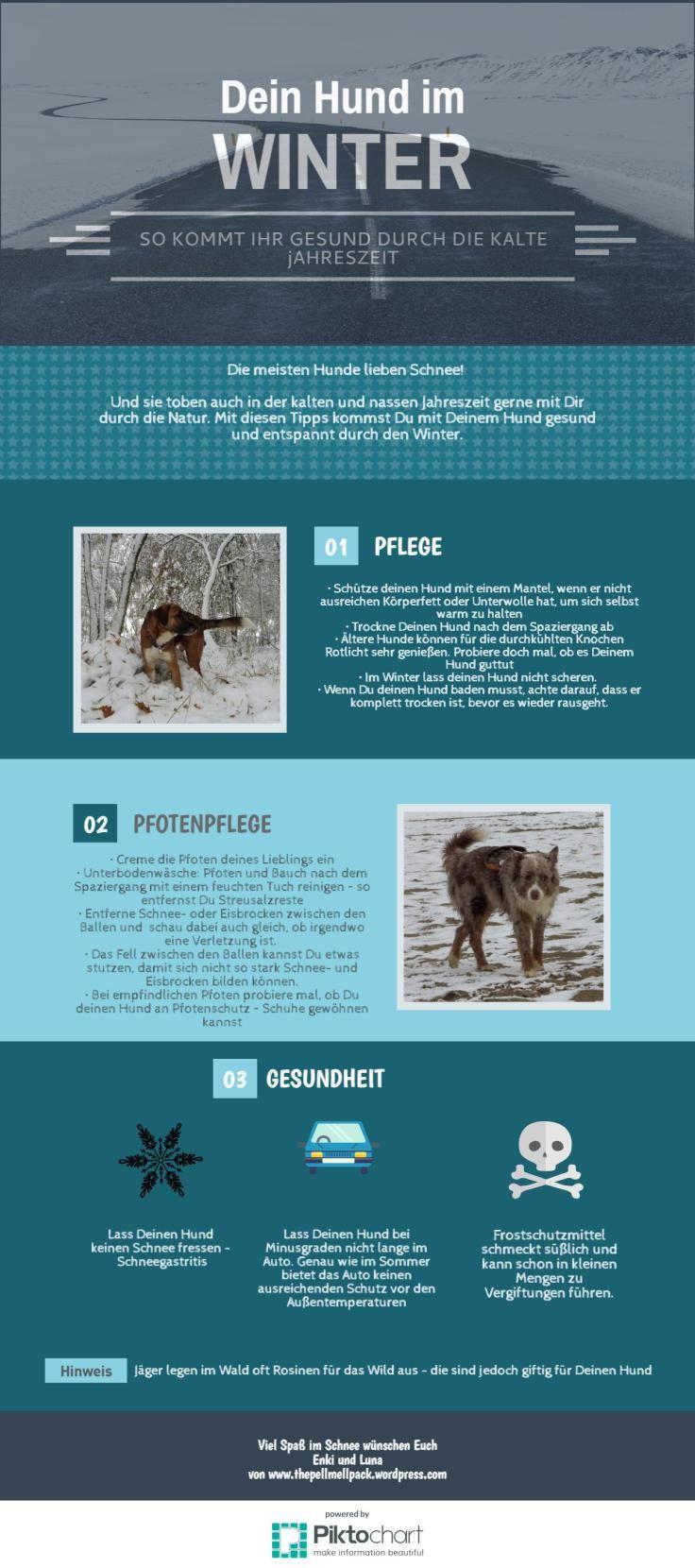 Dein Hund im Winter -- So kommt ihr gesund durch die kalte Jahreszeit | www.thepellmellpack.wordpress.com