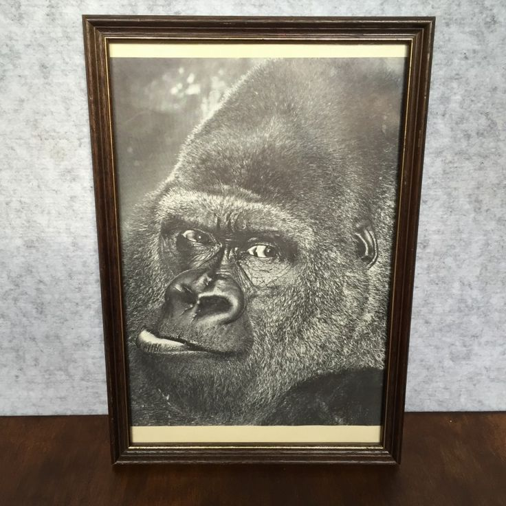 VINTAGE FRAMED GORILLA PRINT - $25 AUD  This guy!  Add some attitude to your space with this vintage gorilla print.  In good vintage condition, ready to hang.
