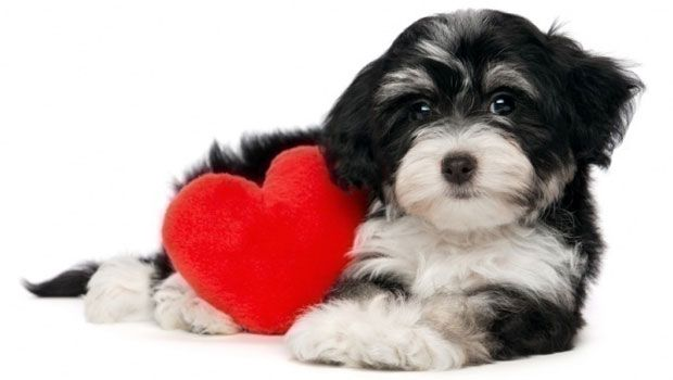 Dogs and Heart Disease