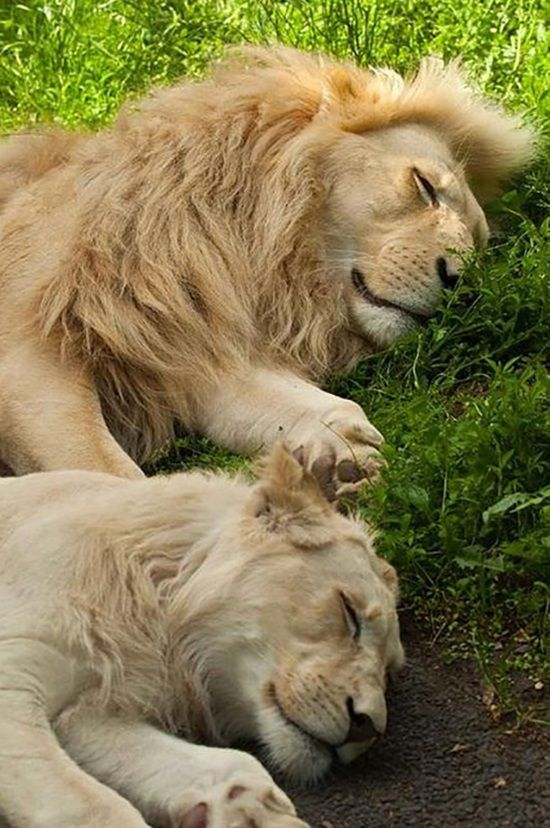 I love how they are the same animal but they look different. Plus I love how they are sleeping in the photo