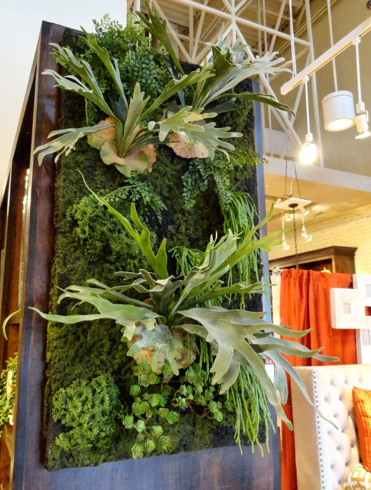 25 best images about shophouse on pinterest terrace for Indoor succulent wall