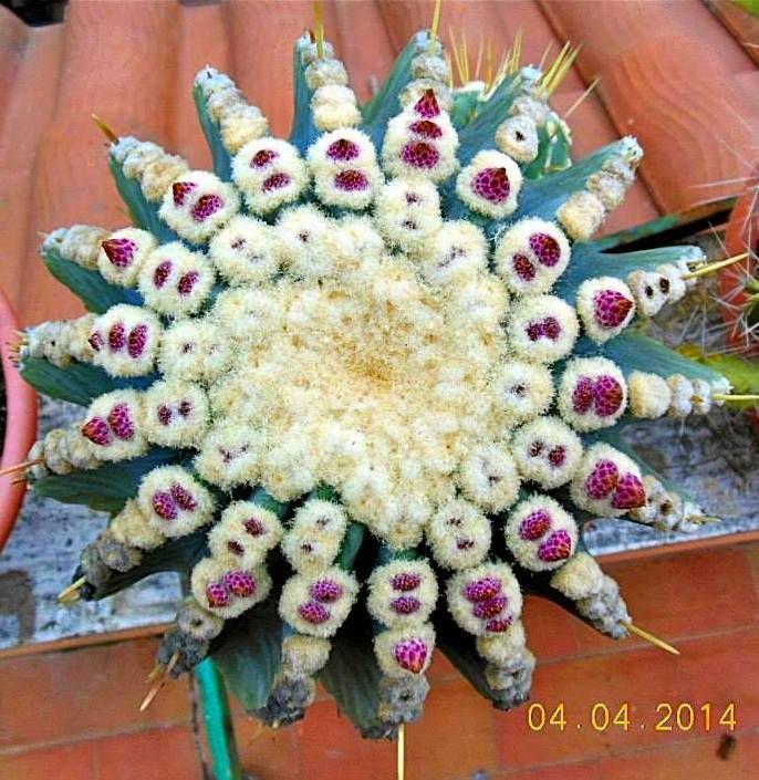 Mandalas de Suculentas y otros origenes...!!!