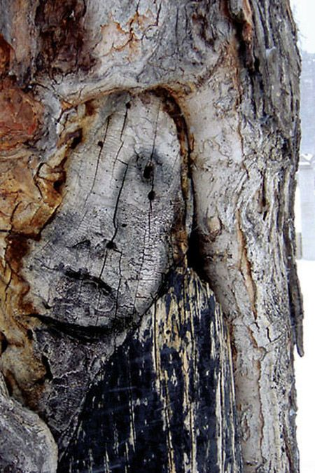 natural face in this old tree