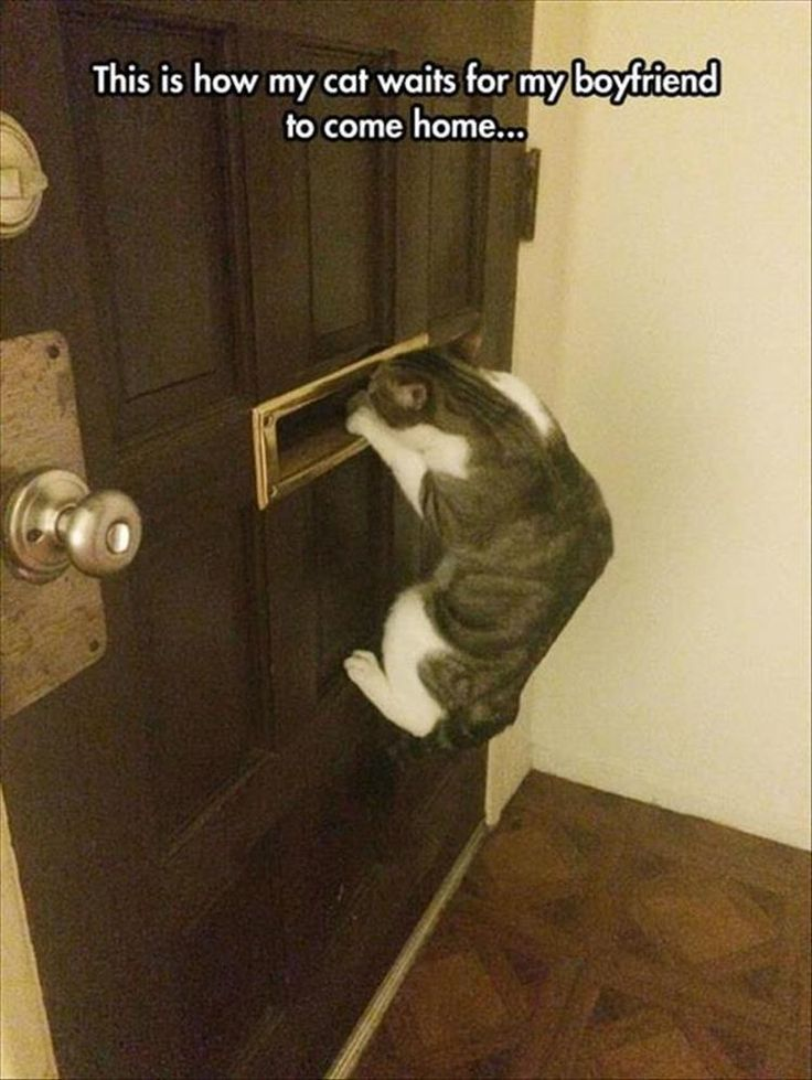 Hilarious cat awaiting the boyfriend
