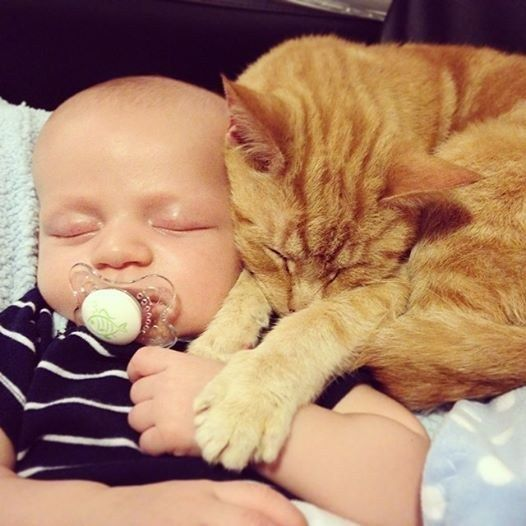 These new best friends. | 42 Pictures That Will Restore Your Faith In Cute