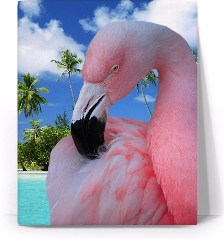 Check out my new product https://www.rageon.com/products/flamingo-and-beach-art-canvas-print?aff=BWeX on RageOn!