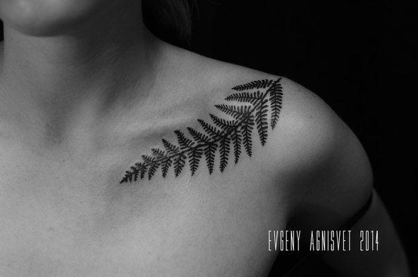 tattoo on shoulder/Fern