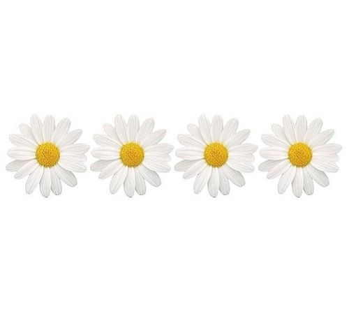 daisies tumblr transparent - Google Search