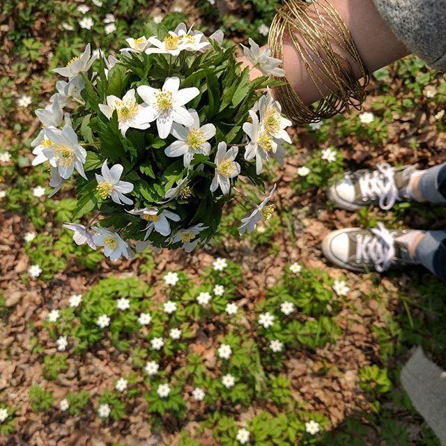 springtime in the forest. joy! . . . #flowers #forest #nature #spring #bouquet #joy #home #malopolska #puszczaniepołomicka #las #natura #wiosna #kwiaty #naturephotography #happy #春 #花 #ポーランド #poland #polska #bochnia #zawilce #dom #krakow