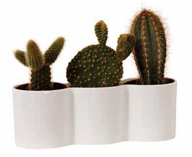 Elho b.for Diamond trio: cilinder vormen zijn een trend. Een bloempot uit het verleden welke hedendaags is vormgegeven. Leuk als mini tuintje met vetplantjes of cactussen. http://www.bloempotwebshop.nl/index.php?p=1&sc=1&cat=1076