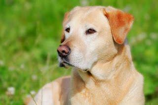 10 perros más populares del año